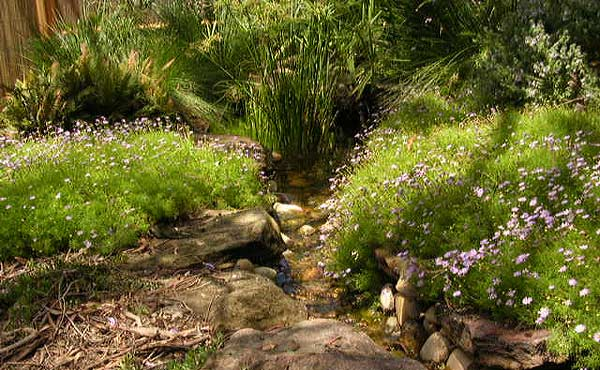 Native garden water feature 006