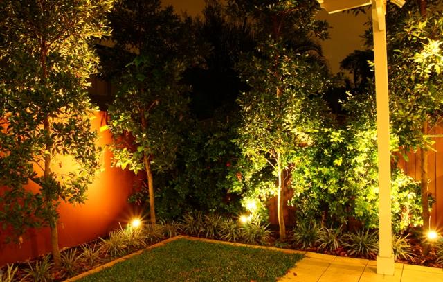 Night garden 005